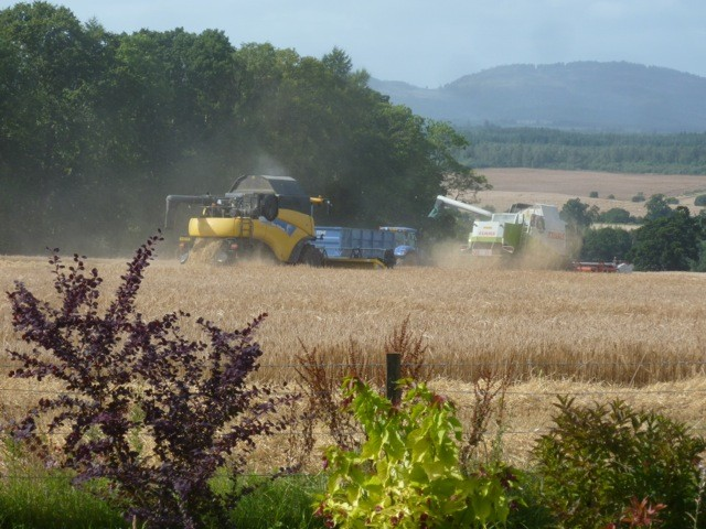 The hum of the combines  harvesting the fields next to Park House in late summer