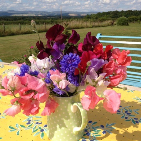 Sweet peas and cornflowers in a milk jug in the garden at Park House