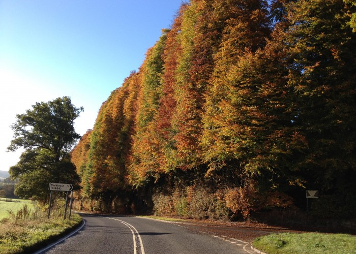 The famous Beech Hedge at Meikleour, the longest and highest hedge in Britain